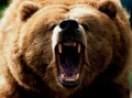 6th: Roar